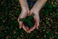 Mensch haltet Erde und pflanzen in der hand - nachhaltigkeit, natur