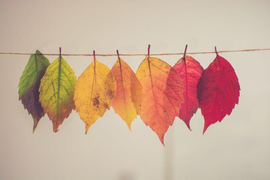 Blätter in unterschiedlichen Farben hängen an einer Schnur