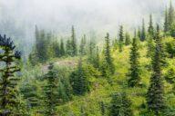 Frau Trailrunning Wald