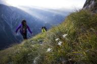 Tirol Edelweiß Zillertal Liebe